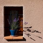 Flowers-Gardens-138
